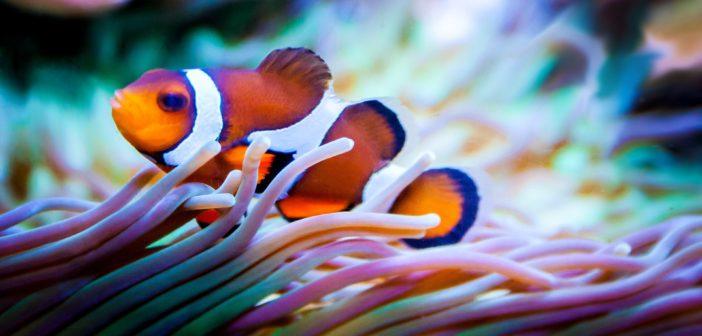 Mořské akvárium