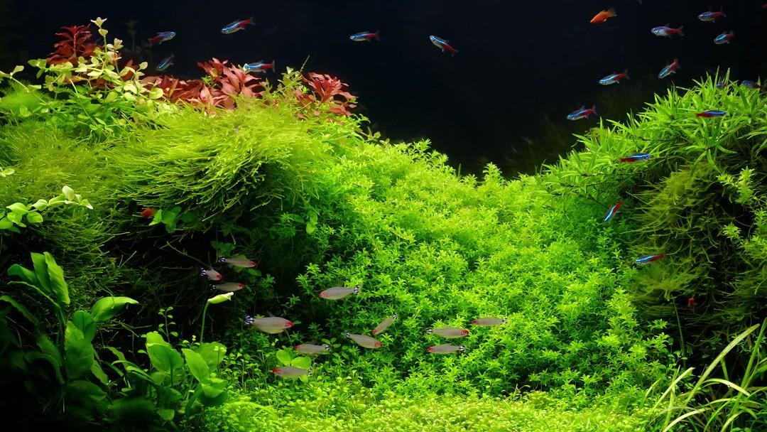 Akvarijní rostliny v rostlinném akváriu