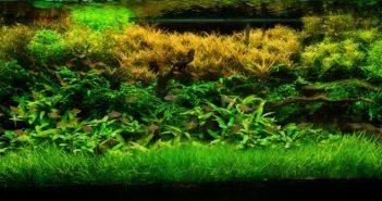 Rostlinné akvárium