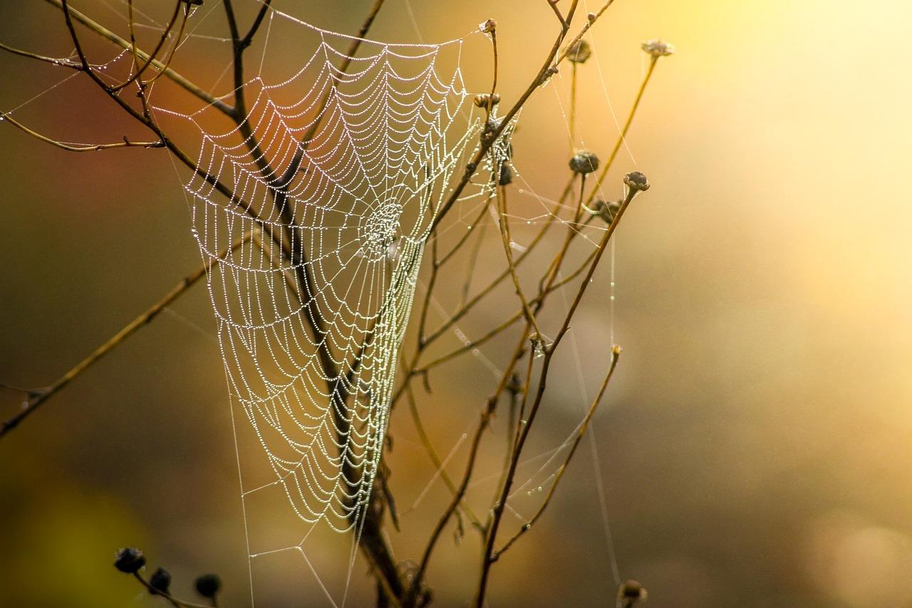 Pavučina a kapky rosy
